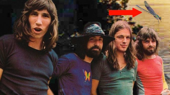 Pink-Floyd-Insect_arrow-735x413